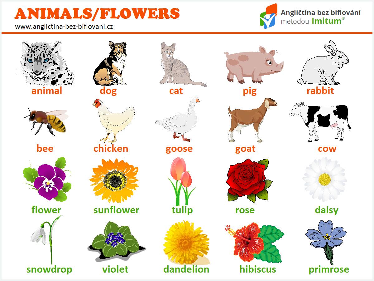 56a58c0a1 Nejpoužívanější slovíčka - zvířata/květiny