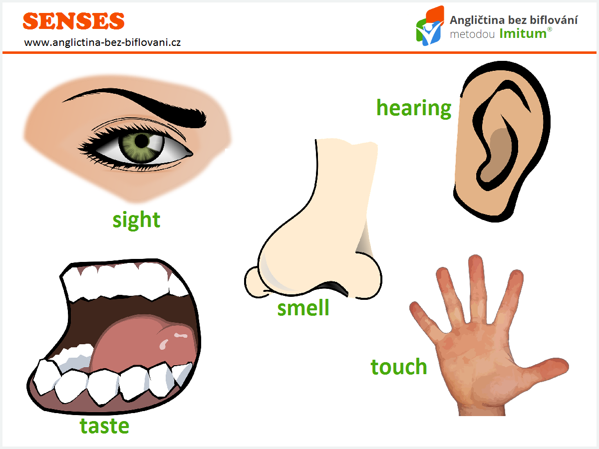 touch senses The sense of touch is one of the central forms of perceptual experience thought to be the first sense to develop, touch occurs across the whole body using a variety of receptors in the skin.